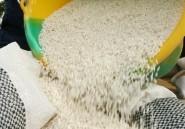L'Afrique dépense 7 milliards de dollars par an pour ses importations de riz