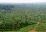Au Gabon, l'entreprise singapourienne Olam rafle (presque) tous les marchés