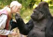 RDC : une vente présumée d'animaux protégés