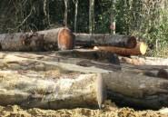 Bois tropicaux: Rougier cède ses filiales au Cameroun et en Centrafrique