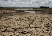 Plus d'un million de Zimbabwéens menacés de pénurie alimentaire, selon l'ONU