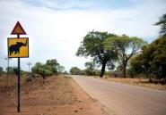 Safari mortel au Zimbabwe pour une touriste allemande