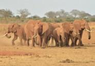 Manifestations pour la libération de la  dernière éléphante du zoo de Johannesburg