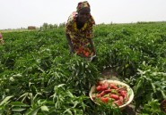 Nigeria: 9 cultivateurs tués, 12 enlevés dans une attaque de Boko Haram