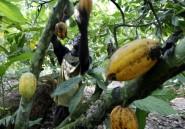 La déforestation se poursuit en Côte d'Ivoire et au Ghana