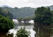 Gabon: importante saisie de kévazingo, bois précieux interdit d'exploitation