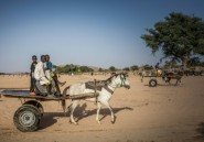 Dans l'est du Tchad, une eau rare livrée par des colporteurs