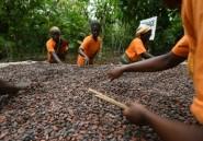 Cacao: Ghana et Côte d'Ivoire suspendent leurs ventes