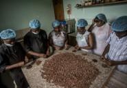 Au Ghana, lueur d'espoir chez les producteurs de cacao