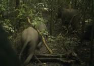 """Commerce de l'ivoire: la France dénonce les """"résistances"""" de l'Europe"""