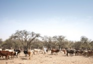 Etat d'urgence dans l'Est du Tchad après des violences intercommunautaires