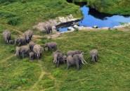 La vente légale d'éléphants sauvages d'Afrique