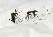Congo : campagne de distribution de moustiquaires pour lutter contre le paludisme