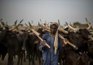 Au Niger, les éleveurs peuls frappés de plein fouet par le changement climatique