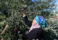 En Tunisie, la couverture santé des paysannes
