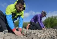 Graines d'espoir: des bénévoles tunisiens au chevet des forêts du pays