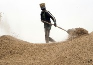 Au Sénégal, la forte demande chinoise perturbe le secteur de l'arachide