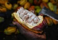 Côte d'Ivoire: 380 millions d'euros pour le  cacao et les grandes cultures d'exportation