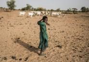Covid-19, mauvaise étoile des bergers peuls du Sénégal