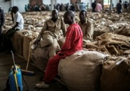 Malawi: avant la présidentielle, la crise des petits producteurs de tabac