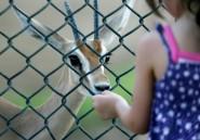 Niger : une quarantaine de gazelles dorcas tuées par des braconniers