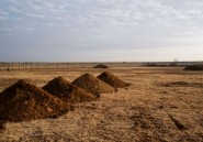 En Afrique du Sud, émoi autour des tombes creusées pour les morts du Covid-19