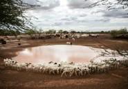 Avec la saison des pluies, les pasteurs peuls du Sénégal reprennent leur transhumance