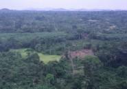"""Côte d'Ivoire: une """"armée verte"""" contre la déforestation"""
