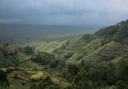 RDC: un écogarde tué dans le parc national des Virunga