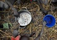 Soudan du Sud: 60% de la population risque une malnutrition aiguë